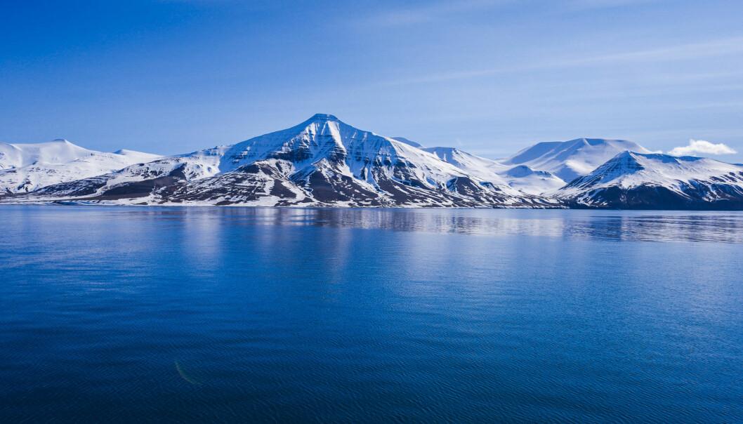 Forskernes resultater fra Arktis viser at det finnes Ole Brumm-strateger i havet. (Foto: Shutterstock / NTB scanpix)