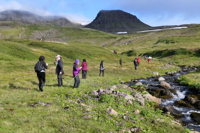 En botanisk stopp på Nordvest-Island. Cruiseturistene var kunnskapstørste og ivrige etter å lære mer om naturen i Arktis. (Foto: Kristine Bakke Westergaard)