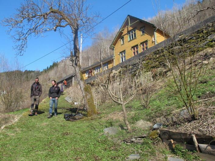 Skoghagen på nedsiden av huset ved Hardangerfjorden. (Foto: Privat)