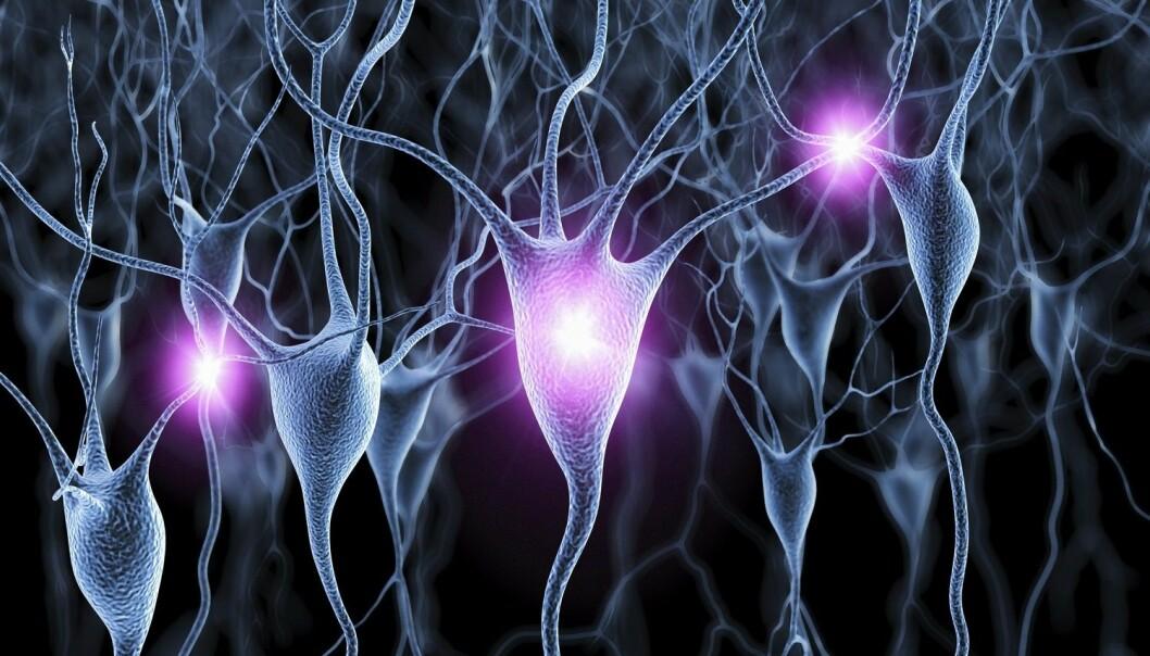 Forskere ved MIT fant at de kunne manipulere såkalte gammabølger i hjernene til mus, og at dette kan ha ført til at plakk som dannes i Alzheimers sykdom, ble sterkt redusert. (Illustrasjon: Science Photo Library / NTB scanpix)