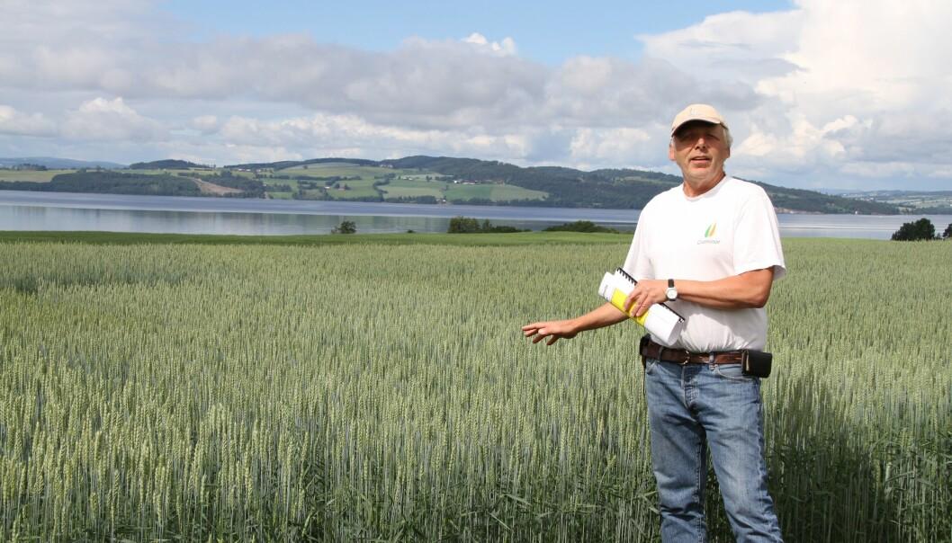 Jon Arne Dieseth, mannen bak kornsorter som Seniorita og Mirakel, mener at landbruket vil tjene på å ta vare på gener fra gamle kornsorter, men også å kombinere disse med nye, for landbruket er avhengig av at foredlere utvikler nye sorter. (Foto: Eva Pauline Hedegart)