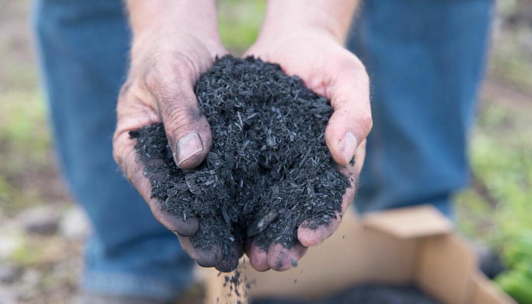 Dette er biokull, som kan pløyes ned og føre til en langvarig økning i karbon i jord. (Foto: Anette Tjomsland)