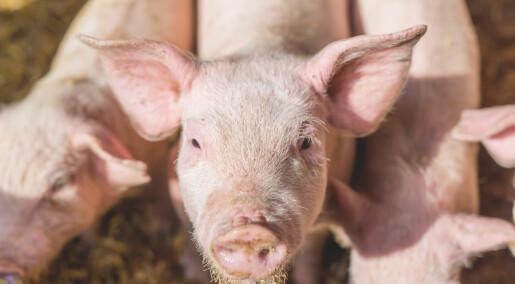 Forskeren forteller: Fremtiden vil fordømme oss for antibiotika i matproduksjonen