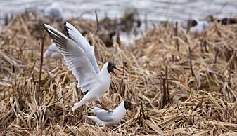 Forskerne anbefaler kontinuerlig målinger av vannet ved Østensjøvannet, som er kjent for sitt rike fugleliv. (Foto: Morten Günther)