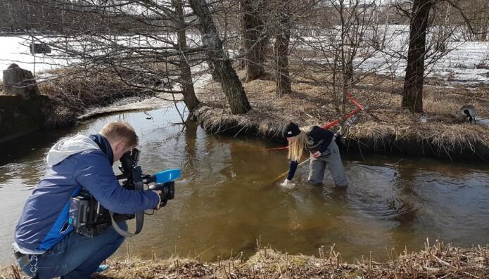 Forskeren Johanna Skrutvold tar vannprøver i en bekk ved Østensjøvannet i Oslo, godt dokumentert av NRK Østlandssendingen. (Foto: Helen French)