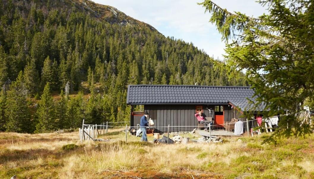 Er du et hyttemenneske? Forskerne fant at familier med hytte gjerne tester hvordan nye gjester passer inn. (Foto: Haakon Harriss, Norsk Folkemuseum)