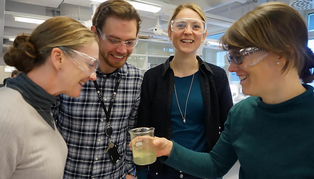 NTNU-forskerne Fride Vullum-Bruer, Andreas Nicolai Norberg, Kristin Lønsethagen og Susanne Jäschke jobber for å få på plass en prototype av algematerialet. (Foto: Mona Sprenger)