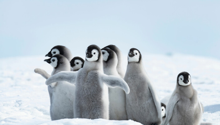 Is og pingviner er det de fleste forbinder med Antarktis. Men kontinentet har også store ressurser til lands og til havs. (Foto: vladsilver / Shutterstock / NTB scanpix)
