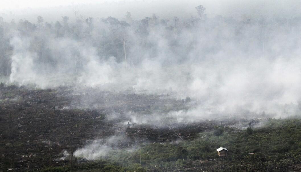 Røyk stiger opp fra en skogbrann i provinsen Riau i Indonesia i 2013. (Foto: Rony Muharrman, AP, NTB scanpix)