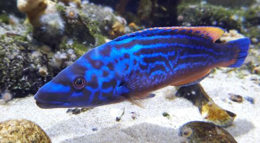 Noen arter kan skifte egenskaper for å leve lenger.Men lønner det seg alltid?