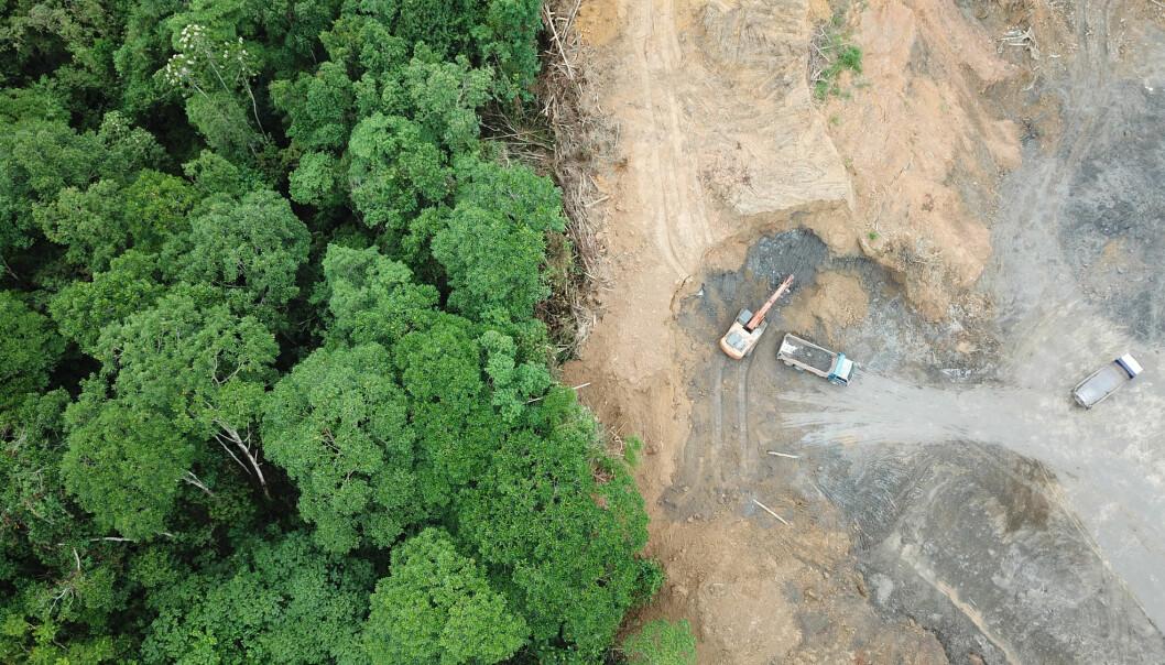 Etterspørselen etter råvarer som mat og dyrefôr, tømmer og papir, drivstoff og mineraler er hovedårsaken til at regnskogen forsvinner. (Illustrasjonsbilde: Rich Carey, Shutterstock, NTB scanpix)