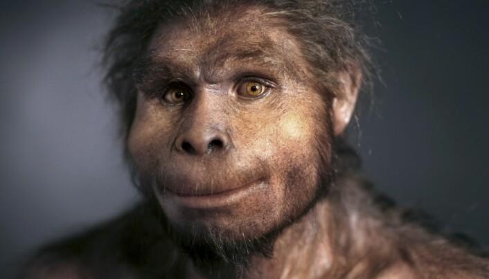 Homo erectus, en tidlig forfader av det moderne mennesket. Det kan ha vært en homo erectus-variant som levde og spiste mat på det israelske funnstedet for 800 000 år siden, men forskerne vet ikke sikkert. (Foto: Science Photo Library/NTB Scanpix)