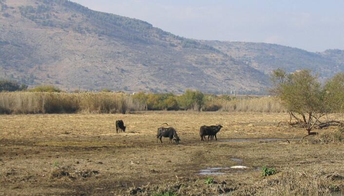 Slik ser det ut i dag i dalen i Israel der forskerne fant den eldgamle boplassen.
