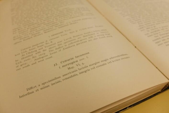 Kapittelet om skrukkelav Eilif Dahls eksemplar av Bernt Lynges bok «Studies on the lichen flora of Norway». Einar Timdel simultanoversetter fra latin: «Den skiller seg fra amerikanske eksemplarer ved at lobekanten er sterkt oppstigende. De er bredere og mindre innskåret, mer runde, hele eller svakt tannede innskåret.» (Foto: Eivind Torgersen)