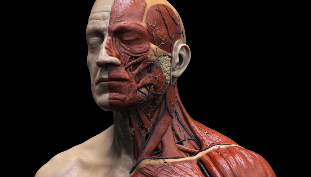 Hvilke av kroppens celler skifter vi oftest ut?