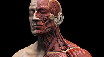 Spør en forsker: Hvilke av kroppens celler skifter vi oftest ut?