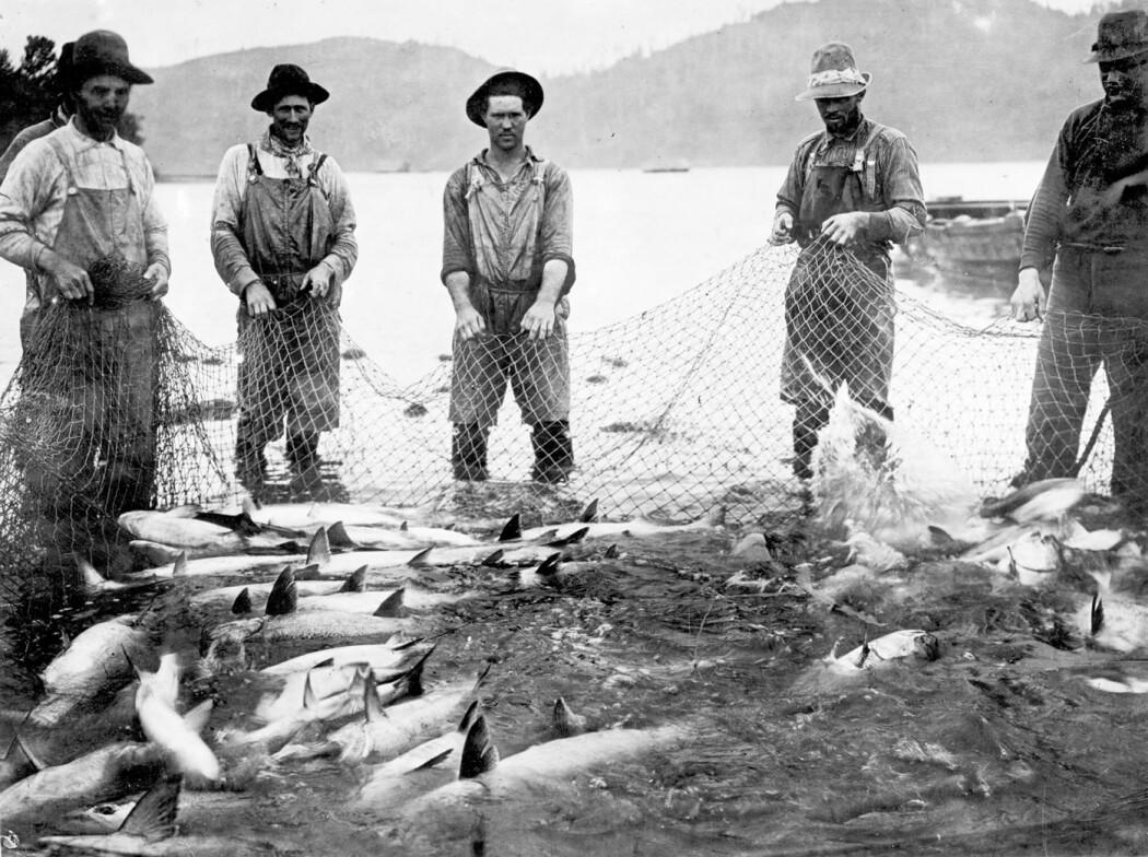 Mye? Lite? Mengden laks i Columbia-elven i USA er i dag dobbelt så høy som i 1930 – men bare en tiendedel av det den var på 1800-tallet. Her fra laksefiske i elva ca 1908. (FOTO: Wikimedia, Public Domain)