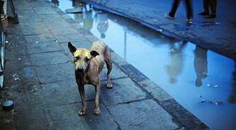Debattinnlegg: Vi frykter at gatehunder bringer med seg farlige sykdommer