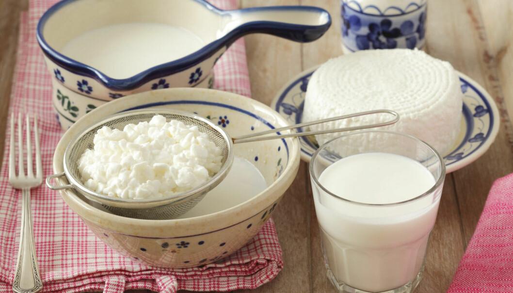 Proteinene som finnes i melk og ost kan ha en spesiell evne til å holde deg slank, ifølge ny forskning. I hvert fall hvis du er mus.  (Foto: Bon Appetit / NTB Scanpix)