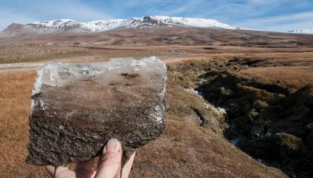 Den raske oppvarmingen av jordbunnen i Arktis vil kanskje fremskynde utslipp av karbon fra mikrober, noe som kan fremskynde klimaendringene. (Foto: Bo Elberling)