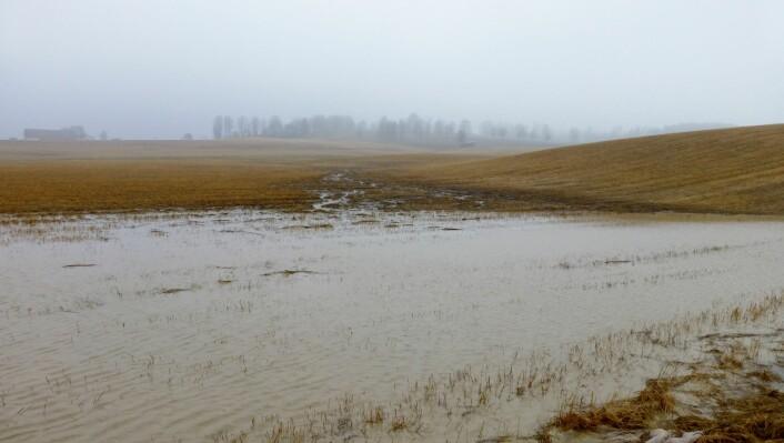 Her ser vi et oversvømt jorde, også i Hobøl kommune. (Foto: Jannes Stolte, NIBIO)