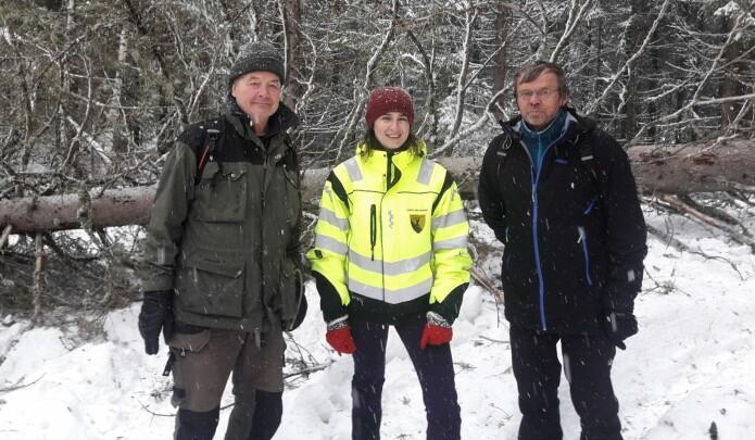 Skogbrukssjef i Sandefjord Sanela Jacobsen har fått med seg skogentomologene Torstein Kvamme (venstre) og Bjørn Økland fra Nibio til barkbilleangrepet område i Andebu. (Foto: Ingar Aadne)