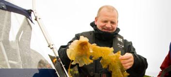 Nofima-forsker Dagbjørn Skipnes har mange gode ideer til hvordan man kan bruke tare som mat. (Foto: Nofima)