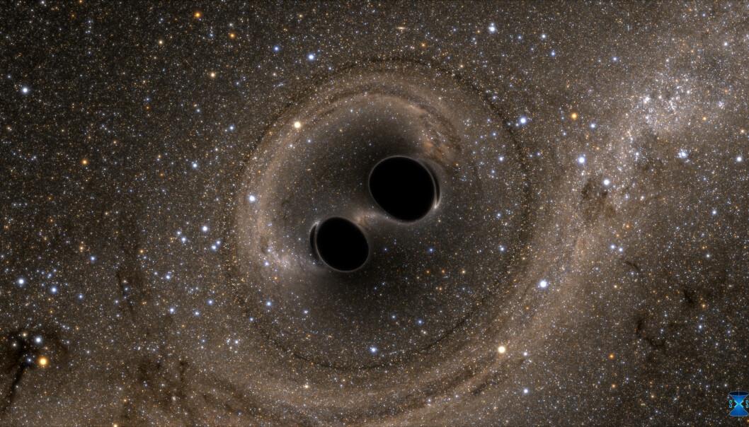 LIGO oppdaget gravitasjonsbølger, eller krusninger i tid og rom, generert som sammenslåtte sorte hull. Simuleringen viser hvordan fusjonen ville sett ut hvis vi fikk en nærmere titt. Stjernene vises vridd på grunn av den sterke tyngdekraften til de svarte hullene. (Illustrasjon: LIGO/SXS)