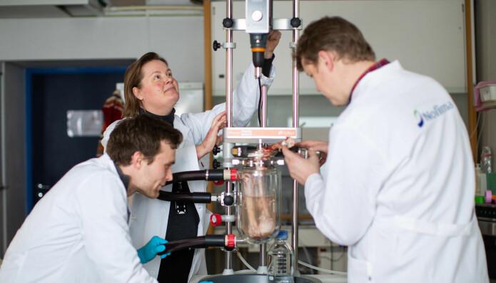 Forskerne Diana Lindberg og Nils Kristian Afseth i Nofima forsker på restråstoff fra både hvitfisk, laks og kylling. Sammen med masterstudent Magnus Rein (til venstre) bruker de melkesyrebakterier for å endre smaken. (Foto: Joe Urrutia)
