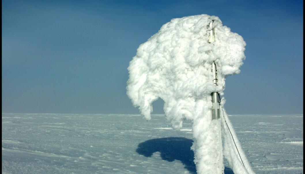 Stakene på toppen av Austfonna brukes for massebalansemålinger og må tåle mye rimdannelser i løpet av vinteren.  (Foto: Thorben Dunse, UiO)