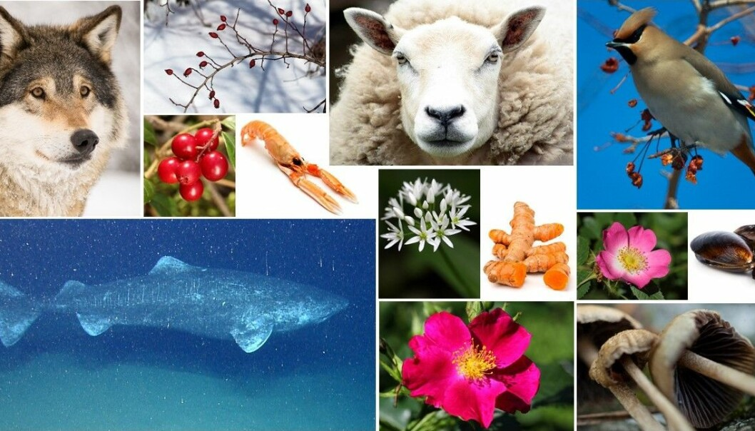 13 av verdens mange millioner arter. (Foto: Colourbox og Wikimedia Commons. Montasje: Eivind Torgersen)