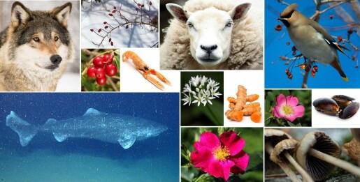 Hva er egentlig en art?