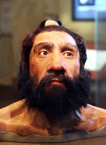 Rekonstruksjon av hodet til en neandertalmann som levde for rundt 70 000 år siden. (Foto: Tim Evanson, Creative Commons BYSA 2.0)