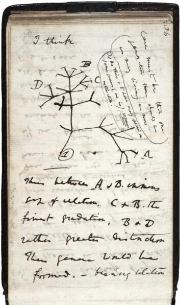 Charles Darwins skisse fra Notebook on Transmutation of Species (1837), hans første tegning av et evolusjonært tre. (Foto: Wikimedia Commons)