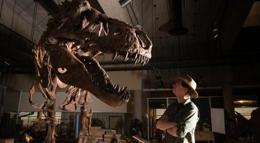 Dette er den største Tyrannosaurus rexen som noensinne er funnet