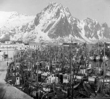 Lofotfisket i Svolvær på 1950-tallet. (Foto: Kanstad/Nordlandsmuseets bildesamling)