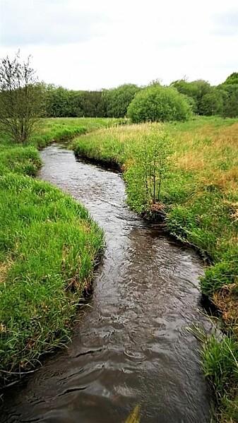 Karup Å var et av de stedene der forskerne tok sine 84 vannprøver til den nye studien. Elven starter i Vallerbæk-området, som defineres som uberørt, men beveger seg inn i et landbruksområde og skifter verdier. Se grafen lenger nede. (Foto: Nils Jepsen/Wikimedia Commons)