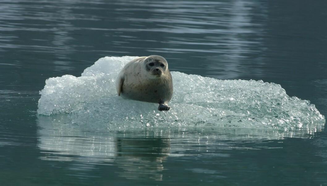 Klimakrisen skjer raskere enn forskere spådde