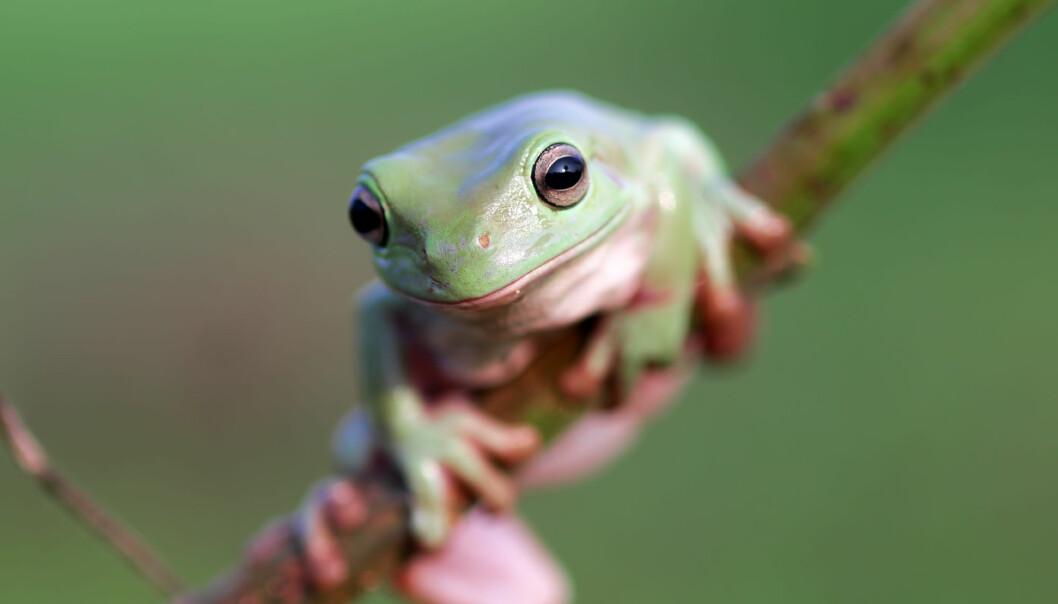 Spredningen av soppsykdommen er rask og har forårsaket død hos mange arter. (Foto: Kholid Mustar, Shutterstock, NTB scanpix)