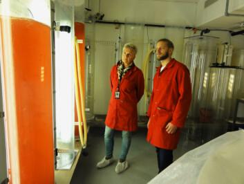 Andreas Hagemann og Gunvor Øie observerer her mikroalger ved det nye nasjonale senteret for planktonteknologi på Brattøra. Begge er forskere ved SINTEF Fiskeri og havbruk. (Foto: SINTEF)