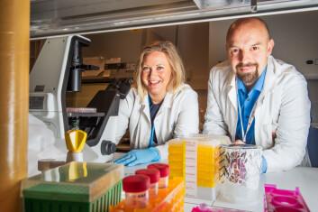 Forskerne har undersøkt om svaret ligger i samarbeidet mellom T- og B-celler, de to mest sentrale aktørene i en immunrespons. (Foto: Kristin Ellefsen, UiO)
