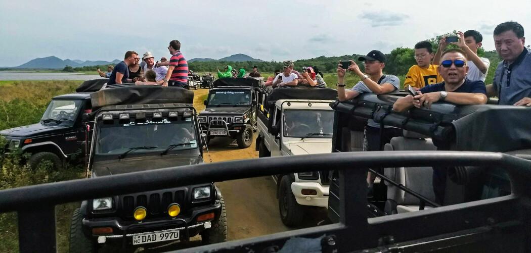 Safari-sjåførane konkurrerte om å koma nærmast dei ville dyra i Minneriya nasjonalpark i Sri Lanka, skriv bloggaren. Foto: Kathrin Jathe.