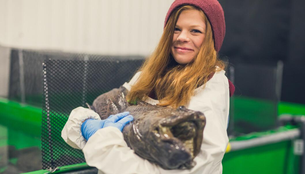 Helene Rønquist Knutsen har undersøkt om flekksteinbiten tåler mikroalger i fôret. (Foto: Frida Bringslimark)