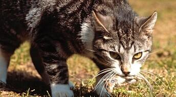 Så farlig er musegift for andre dyr