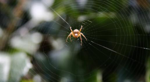 Edderkoppen kan stemme nettet som et instrument