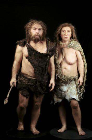 En rekonstruksjon av neandertalkvinne og –mann basert på fossilfunn. Modellen er laget av Elisabeth Daynes fra Daynes Studio i Paris. (Foto: Science Photo Library)