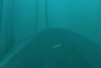 Denne hvithaien filmer mens den jakter på sel