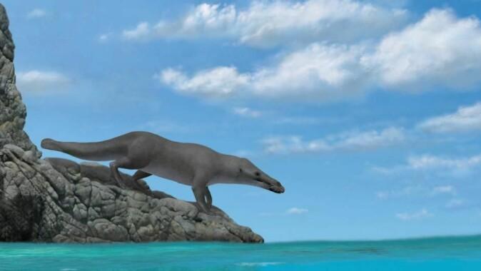 Urhvalen var en type amfibisk dyr som levde både på land og i vann. Som otere i dag. (Illustrasjon: Alberto Gennari)