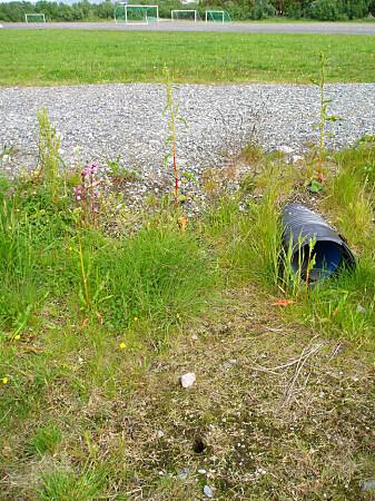 Her på Mandelasletta i Tromsø, som tidligere var en søppelfylling, fant forskerne den spesielle bakterien. (Foto: UiT)
