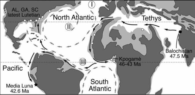 De svarte pilene viser hvordan forskerne mener hvalene har spredt seg. De starter ved Tethyshavet for 47,5 millioner år siden. De svømmer rundt Vest-Afrika og krysser Atlanterhavet. Deretter sprer de seg mot Nord- og Sør-Amerika. (Lambert et al.: «An amphibious whale from the middle Eocene of Peru reveals early South Pacific dispersal of quadrupedal cetaceans)